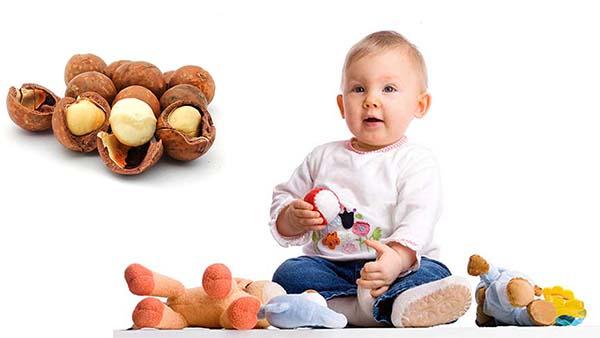 Ăn hạt macca mỗi ngày rất tốt cho sự phát triển trí tuệ cho bé